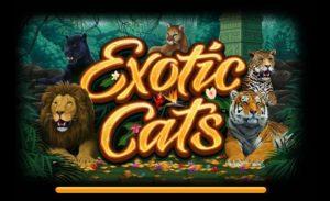 игровой автомат экзотические кошки